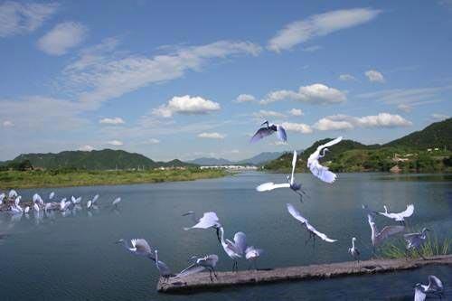 【滁州拓展基地】滁州白鹭岛拓展训练基地
